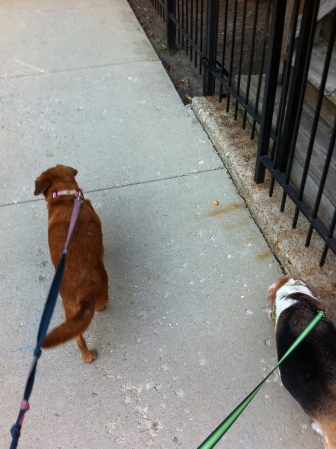 From the backside: the late Sasha SmeeMaLee and Rocco-Taco-He-yead! Sasha passed on in November and we miss her dearly.
